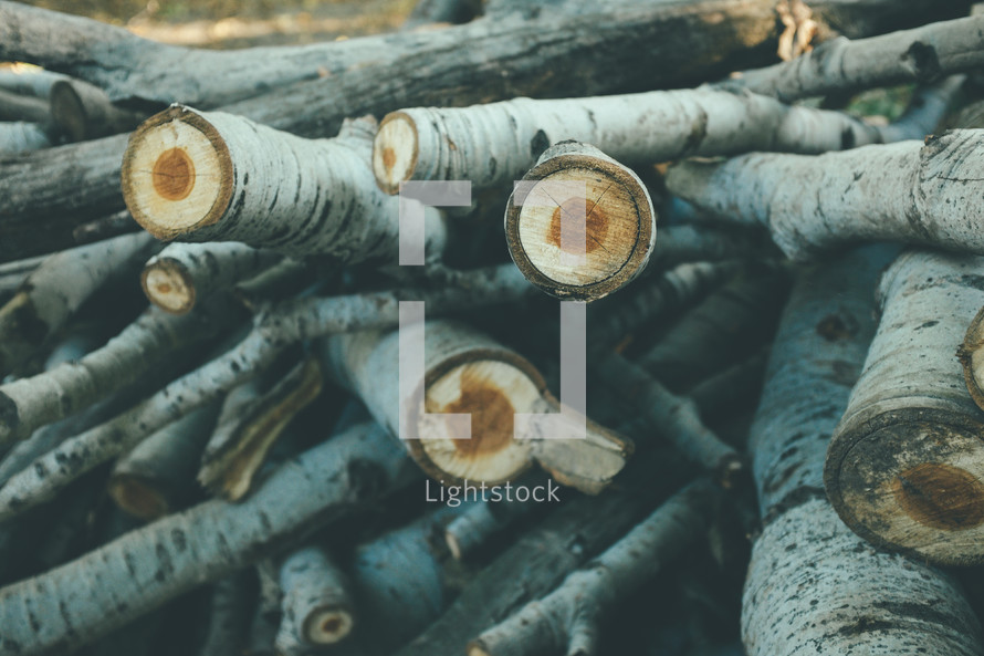 pile of logs and sticks