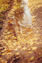 fall leaves floating in a puddle
