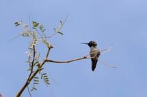 hummingbird in a tree