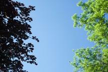 leaves on summer trees
