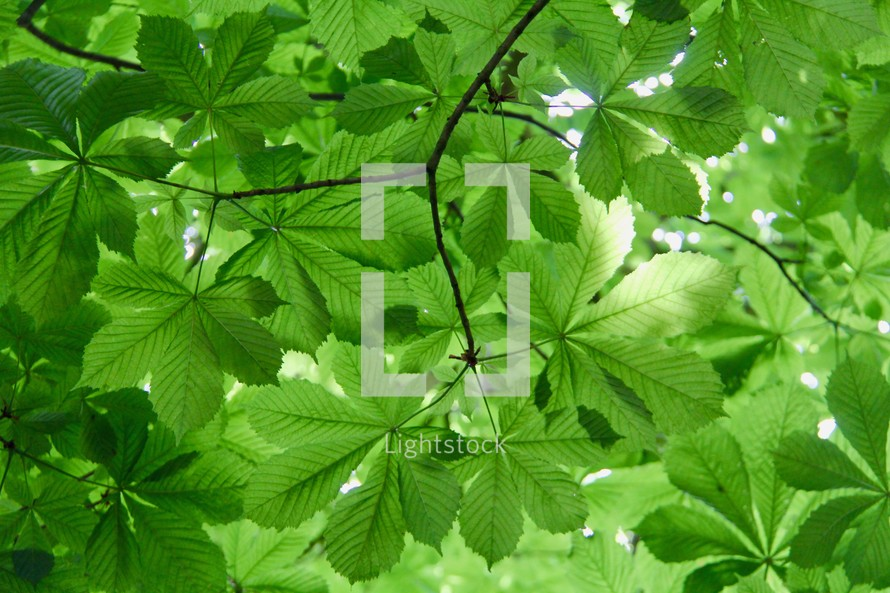 green leaves on a summer tree
