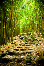 steps in a bamboo forest