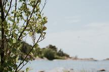 tree on a shore