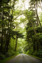 rural road through a forest
