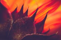 red orange petals