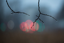 wet branches and bokeh lights