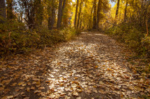fall leaves on a path