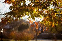 fall foliage on a tree