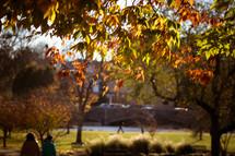 fall foliage at a park