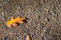 oak leaf on mulch