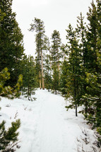 snow on the ground in a forest