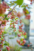 red berries on a branch