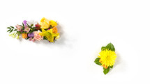 live flowers floral collection