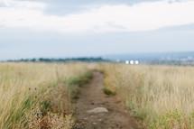 a path through tall grasses