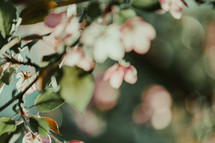 out of focus pink flowers on a tree branch