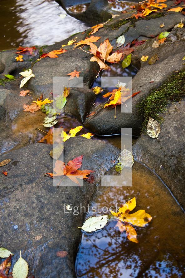 Fall leaves on rocks near creek.