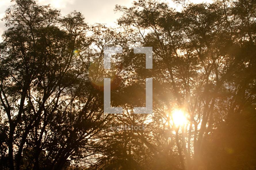 sunlight behind trees