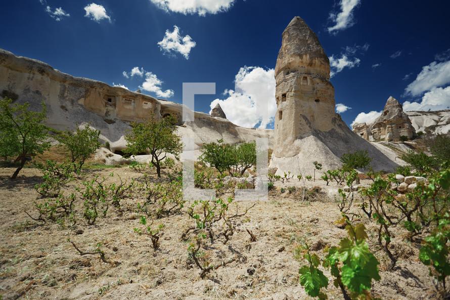 vineyard at the geological rock formation in Cappadocia, Turkey