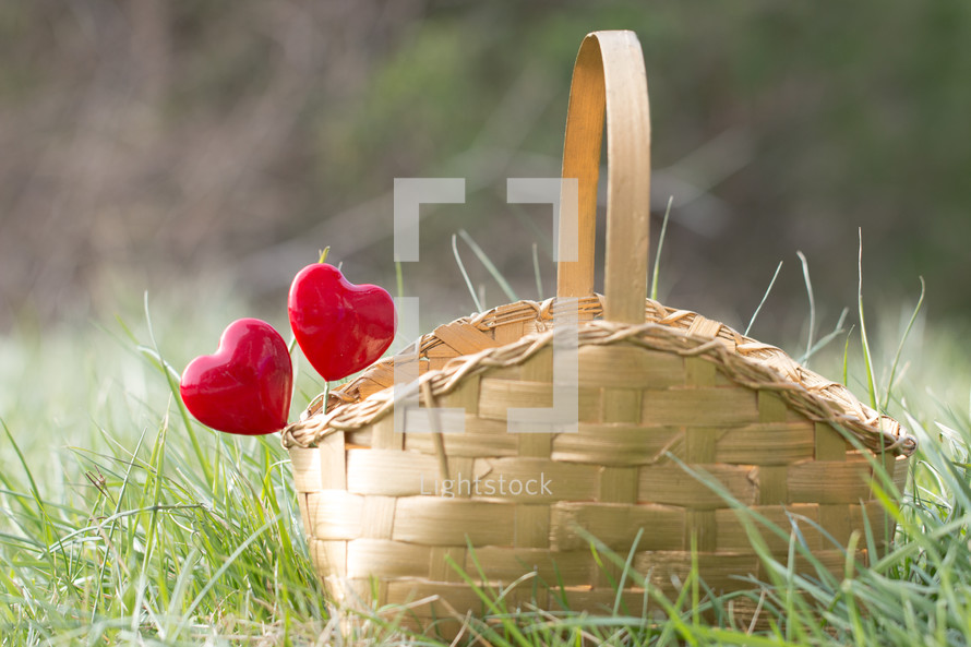 Red hearts on sticks in a basket sitting in grass