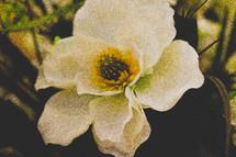 Blooming white flower.