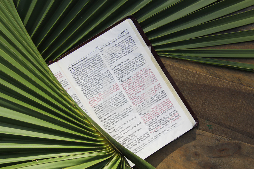 Bible in palm fronds