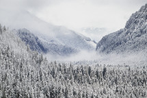 steam rising above a winter forest in the mountains