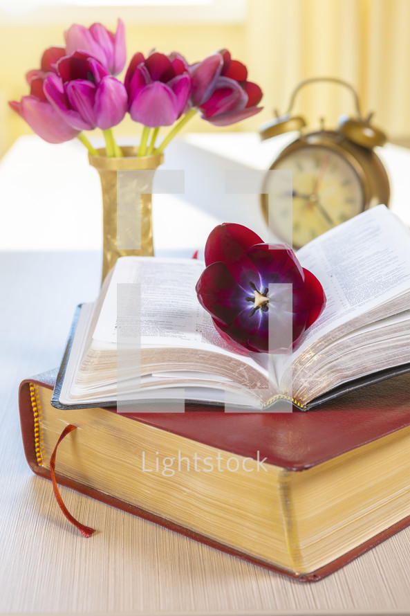 tulip on the pages of a Bible