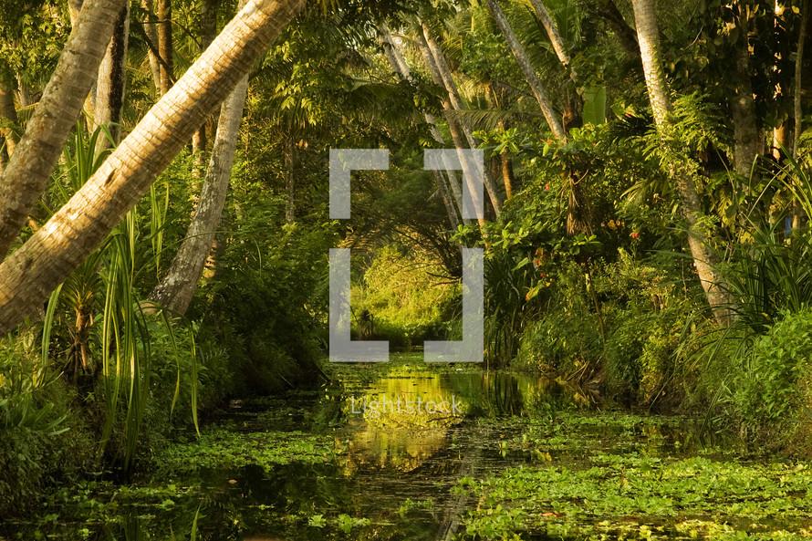 Swamp water.