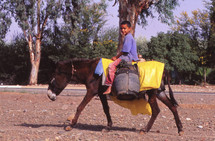 a boy riding a mule carrying water