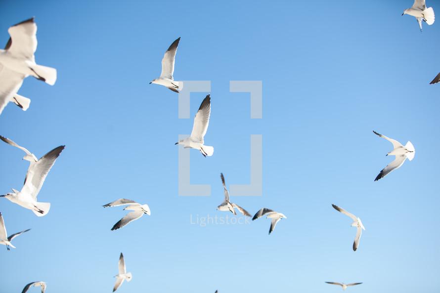 seagulls in flight in a blue sky