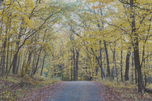 fall leaves covering a country road