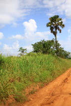 Dirt road leading to palm tree on hill.