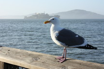 seagull perched on railing