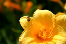 bug on a yellow flower