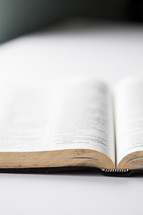 open Bible on a white background