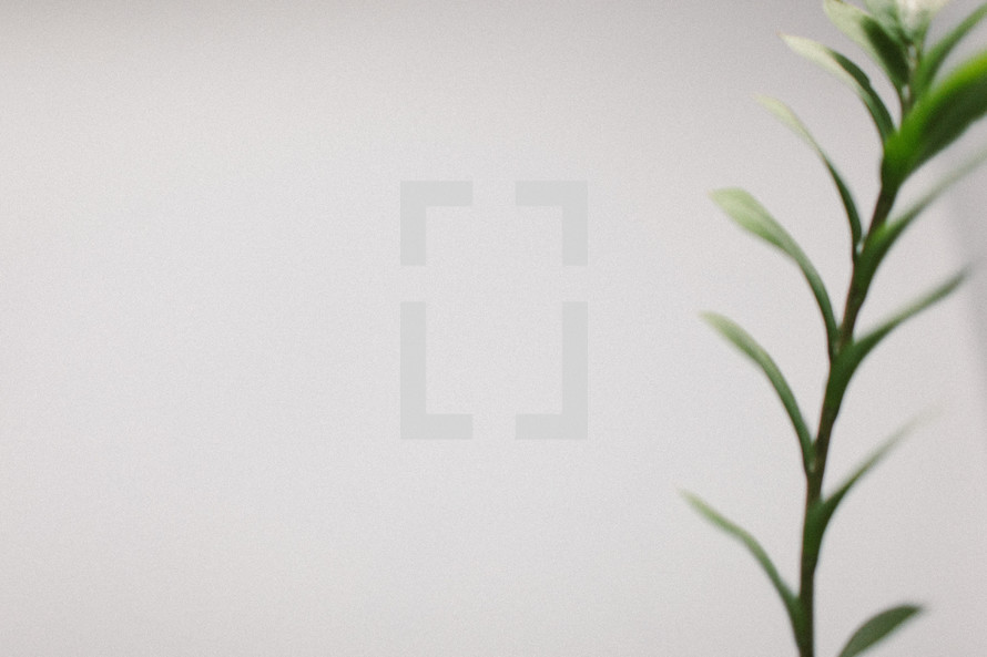 A stem of greenery on a white background.