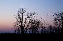 birds perched on a trees at sunset