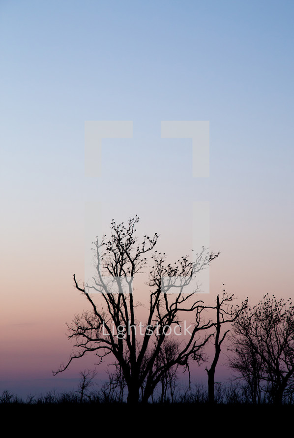 birds perched on trees at sunset