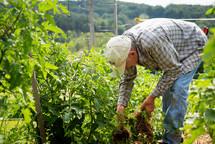 a farmer tending his crops