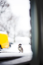 song bird on a window sill in winter