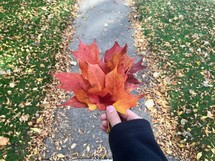 arm holding out red fall leaves over a sidewalk