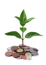 new life sprouting from money