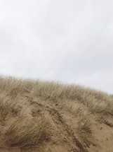 sand and grass on a sand dune at a beach