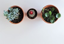 overhead view of potted plants