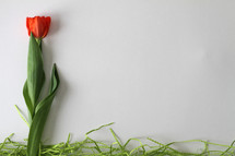 single red tulip and green straw on a white background
