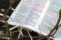 Crown of thorns in front of a Bible. John 19
