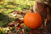 pumpkin next to a tree stump