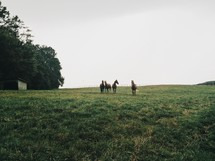 horses on a hillside pasture