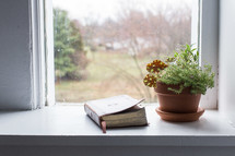 potted plant and Bible in a window