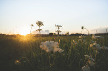 sun setting over a field of tall grasses and wildflowers